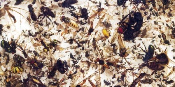 Il calo del numero di insetti 'minaccia il collasso della natura