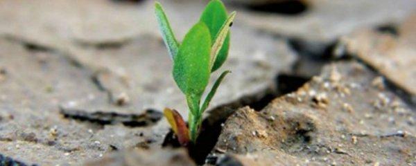 La questione ecologica è sovrana