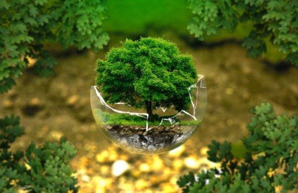 """""""L'ecologia profonda"""" di Guido Dalla Casa e il pensiero verde"""