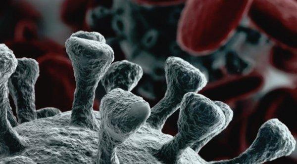Irrazionalità e diffusione pandemica