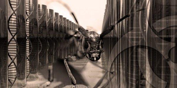 Perché il Pentagono utilizza gli insetti per scopi militari?