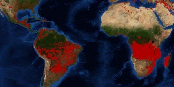 Le foreste della Terra stanno andando a fuoco