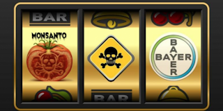 Bayer-Monsanto: l'accoppiata perversa