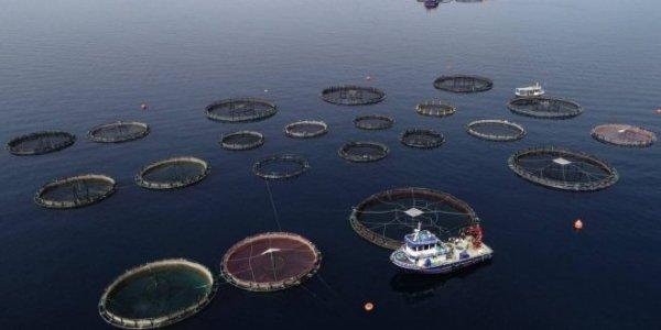 L'industria della pesca è la più grande minaccia per i nostri oceani