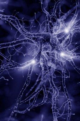 Le connessioni tra metafisica e neuroscienze. Sulla necessità di una nuova forma di conoscenza