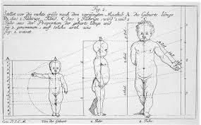 Dall'homo erectus agli Hobbit: l'evoluzione torna indietro