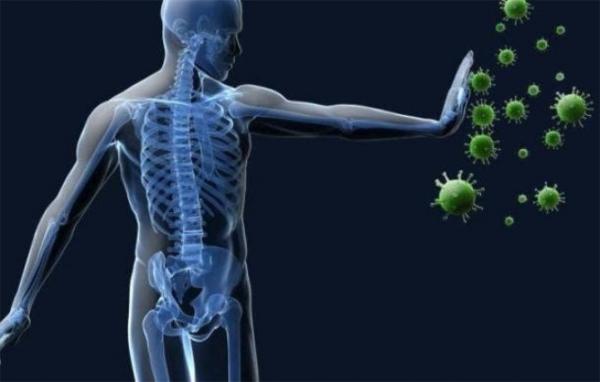 Covid-19, nel midollo osseo la chiave di un'immunità di lunga durata