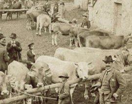 Una repubblica parlamentare ridotta a un mercato delle vacche