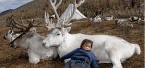 Gli animali nel contesto naturale e nella società umana