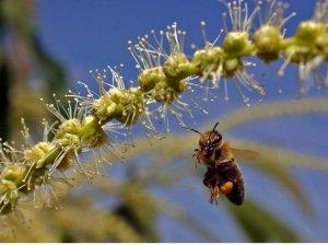 Senza api non c'è vita (e l'Italia ha le migliori). Ecco perché bisogna aiutarle a resistere
