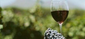 Il vino dei Berici? Se lo conosci, lo eviti
