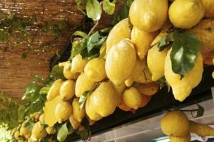 Meno ponti più limoni