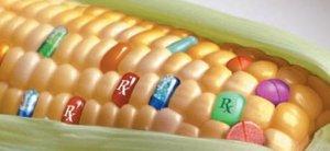 Juncker autorizza gli OGM nella UE. E' la fine della sovranità alimentare