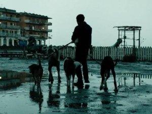 Dogman (o le prevedibili virtù dell'ignoranza)
