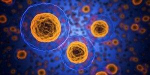 L'inflessibilità metabolica è il fattore di rischio fondamentale per il COVID-19