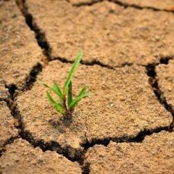 """Cambiamenti climatici, """"eventi estremi aumenteranno: così pregiudicata produzione agricola. Effetti maggiori in Africa e Asia"""""""