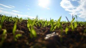 Bioregionalismo terra terra... Partendo dall'agricoltura ecologica