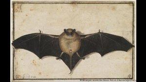 Lo strambo pipistrello