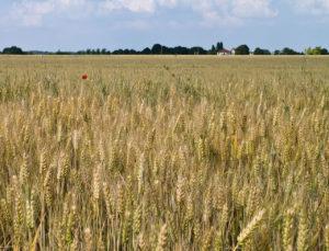 Agricoltura: se la sostenibilità non è un'opinione