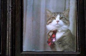 Assange, il gatto e il nostro diritto di sapere