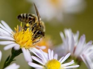 Le api e l'inverno sparito