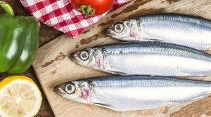 Elogio... funebre delle sardine