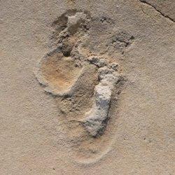 A Creta passò un uomo, 6 milioni di anni fa...
