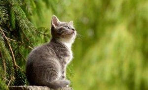 Bioregionalismo e relazione ecologica fra uomo, natura ed animali