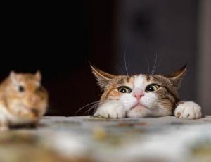 Del gatto e del topo