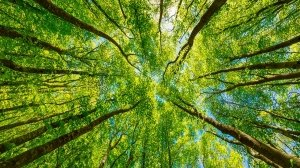 La natura è reazionaria?